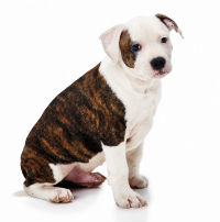 Macarthur Vet Caring for Your Puppy 2