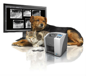 Digital dental x-rays for dogs and cats