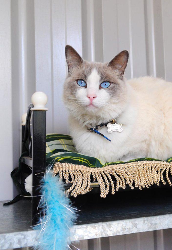 Macarthur Vet Cat Boarding 5