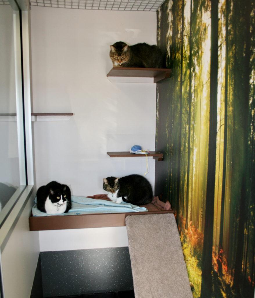 Macarthur Vet Cat Boarding 1