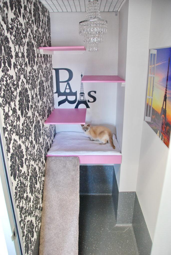 Macarthur Vet Cat Boarding 3