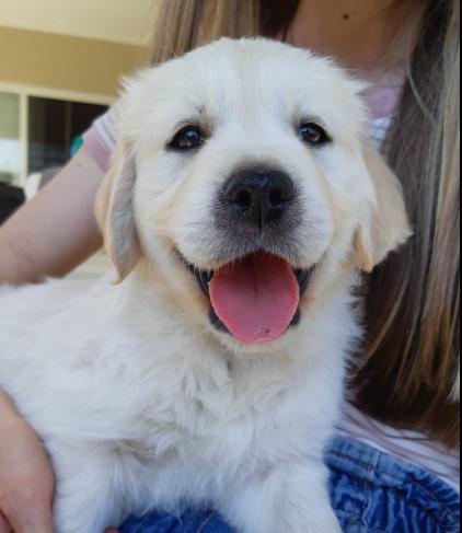 Macarthur Vet Meet Chisel the Puppy! 1