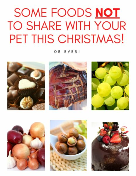 Macarthur Vet What NOT to give our pets this Christmas! 1