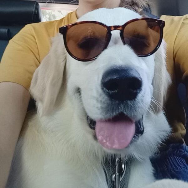 Macarthur Vet Puppy Mischief! 2