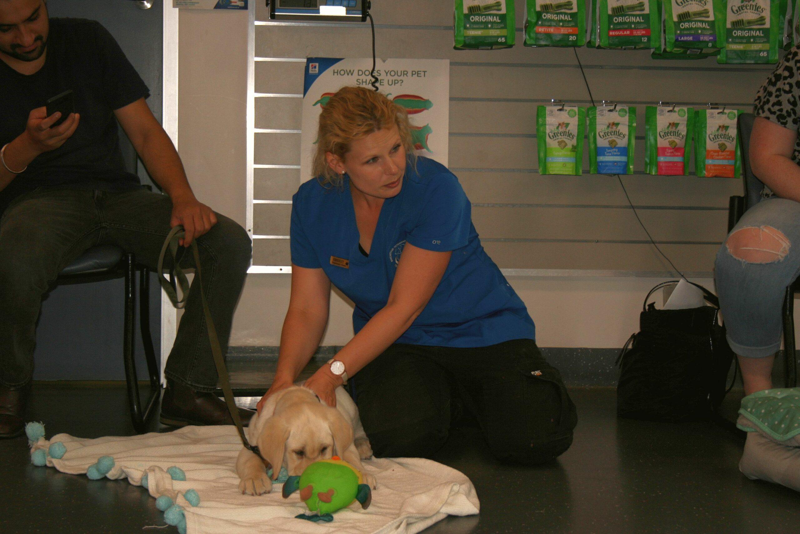 Macarthur Vet Chisel's First Puppy Preschool! 1