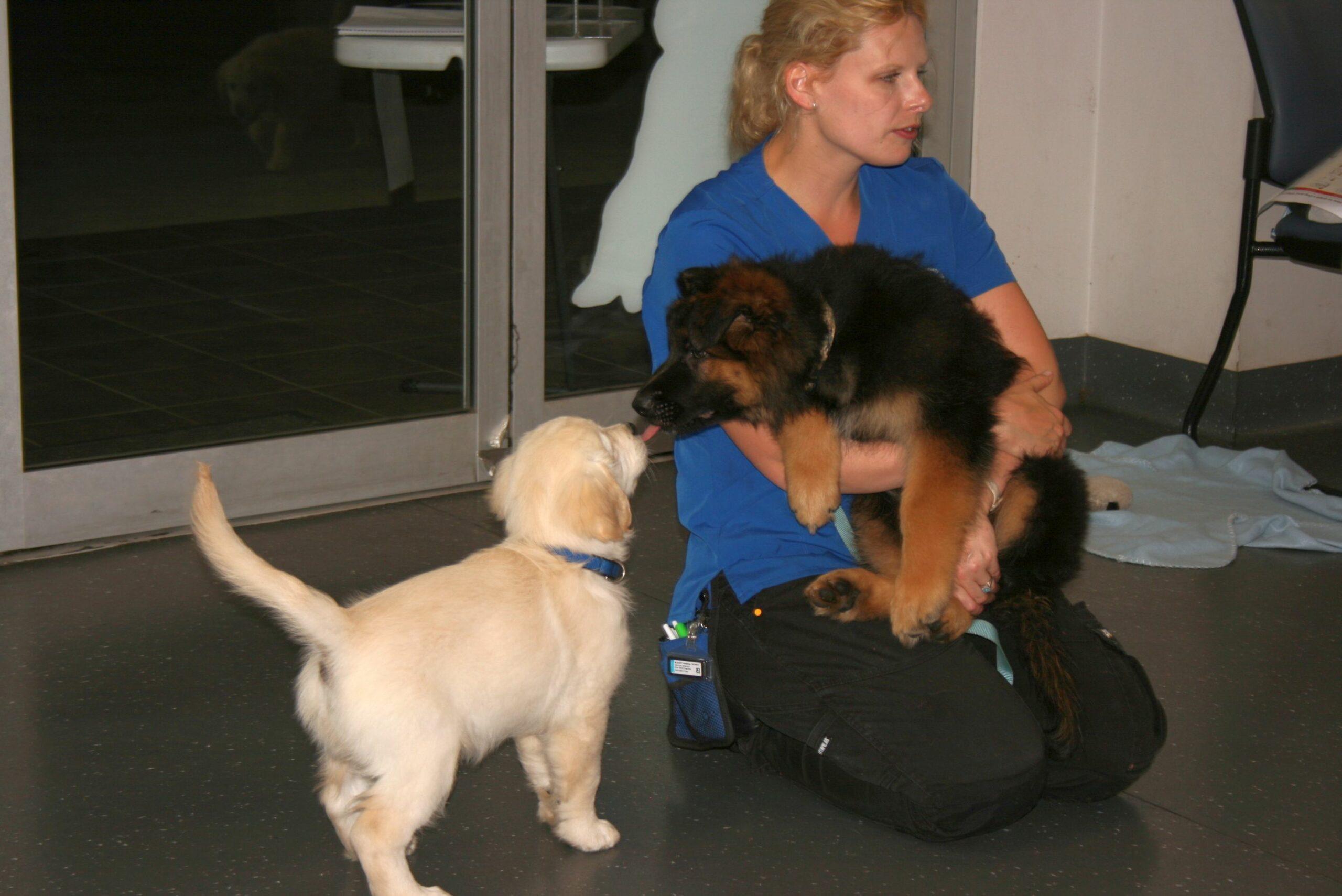 Macarthur Vet Chisel's First Puppy Preschool! 6