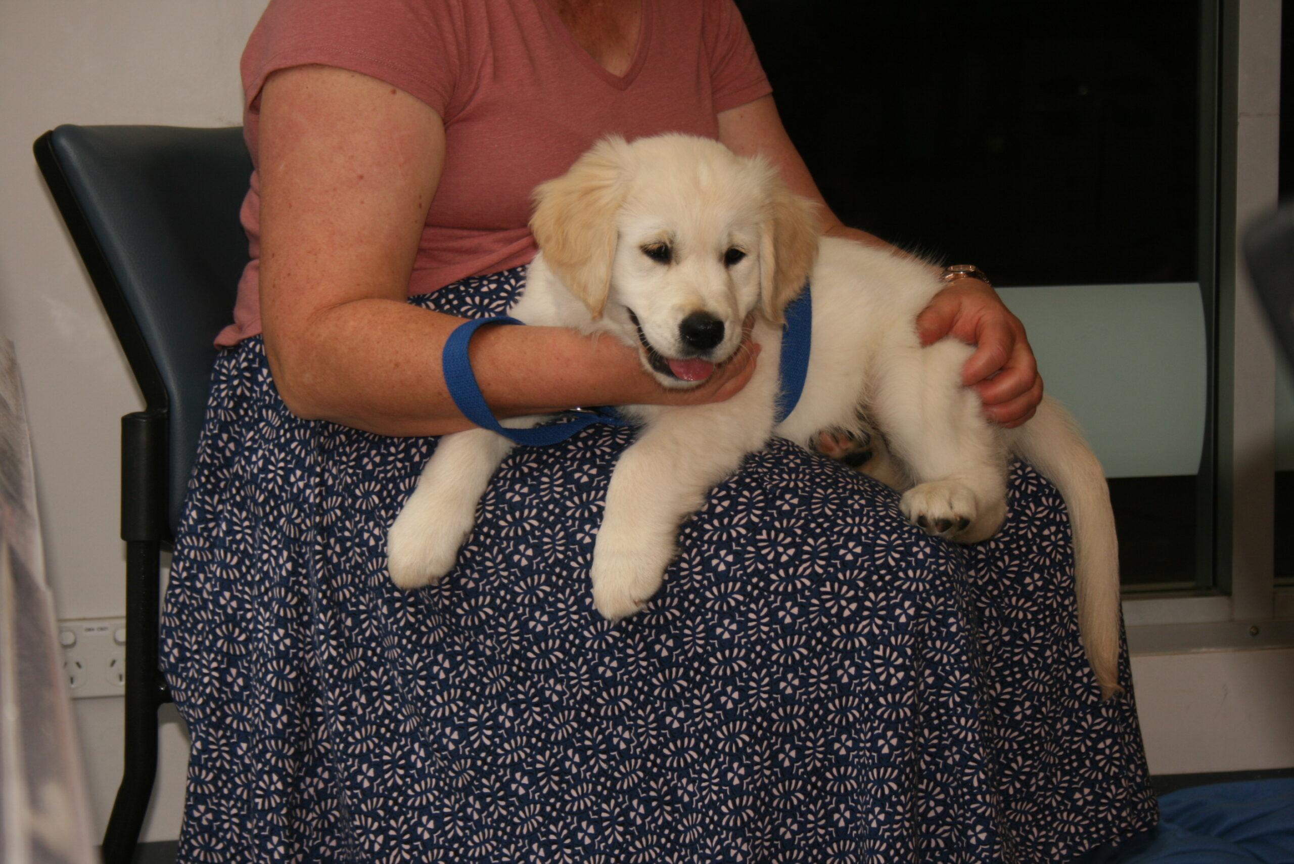 Macarthur Vet Chisel's First Puppy Preschool! 10
