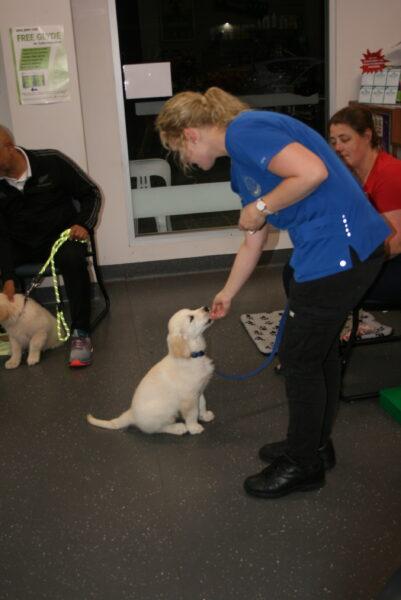 Macarthur Vet Chisel's 2nd Puppy Preschool 1