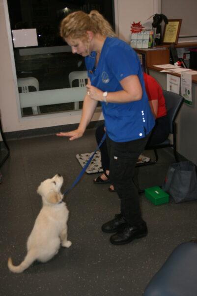 Macarthur Vet Chisel's 2nd Puppy Preschool 6