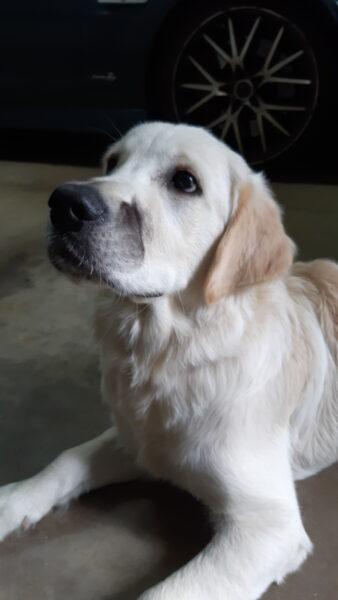 Macarthur Vet Puppy Mischief! 7