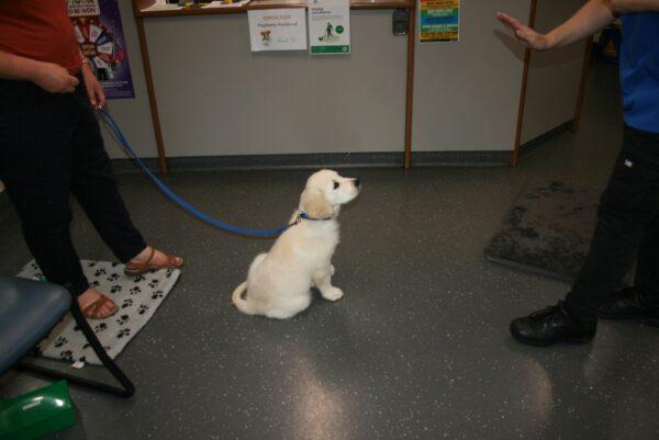 Macarthur Vet Chisel's 3rd Puppy Preschool 1