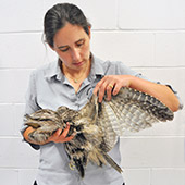 Macarthur Vet Wildlife and Rescue 2