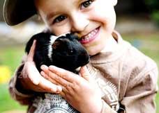 Macarthur Vet Children and Guinea Pigs 1