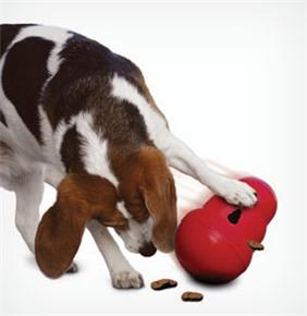 Macarthur Vet Environmental Enrichment to Help Your Dog Combat the Winter Blues 1