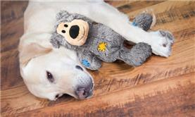 Macarthur Vet Environmental Enrichment to Help Your Dog Combat the Winter Blues 2