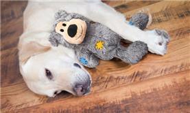 Macarthur Vet Environmental Enrichment to Help Your Dog Combat the Winter Blues 2