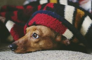 Macarthur Vet Pet Care Tips for Cold Weather 1
